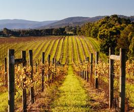 Explore the vineyards