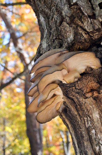 秋は茸の美味しい季節です