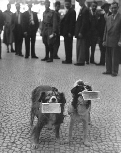 Dogs selling lotary tickets