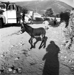 Yildiz Moran's Shadow and Donkey