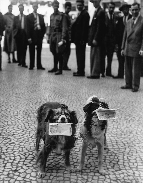 DOGS SELLIING LOTARY TICKETS / PIYANGO BILETI SATAN KÖPEKLER, Lisbon, Potugal 1952
