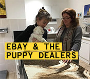 How Gumtree UK squared up to the puppy dog mafia (and why eBay needs to follow their lead)