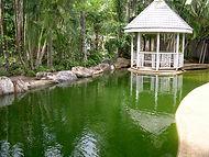 Green unhealthy pool