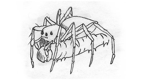 spider_Illustration04.jpg