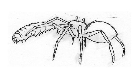 spider_Illustration02.jpg