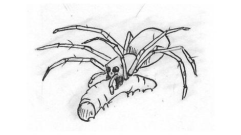spider_Illustration03.jpg