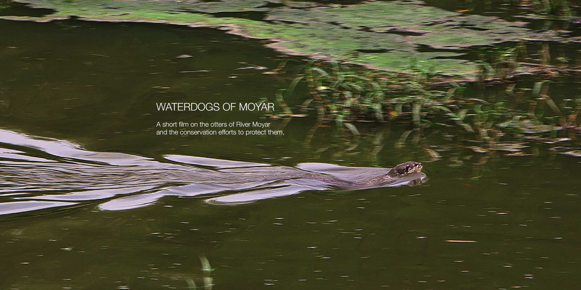 Waterdogs of Moyar