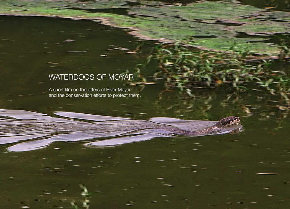 Waterdogs of Moyar
