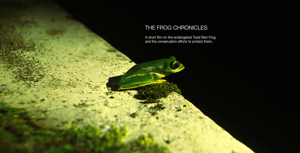 The Frog Chronicles