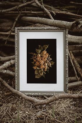 Herbaciane róże 01