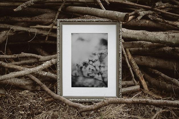 Grey flowers 02