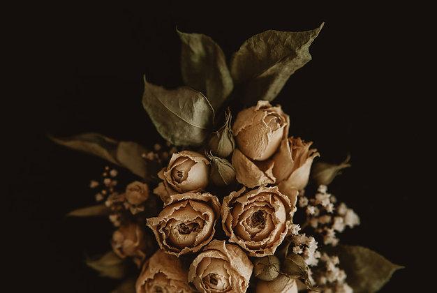 Herbaciane róże 03