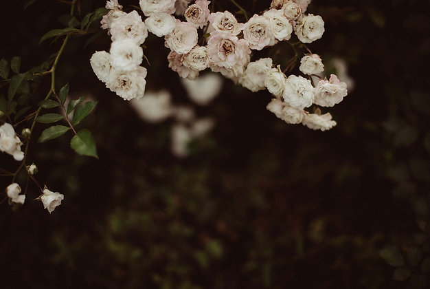 Różany łuk