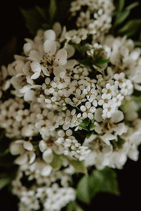 Kwiaty w bieli 02
