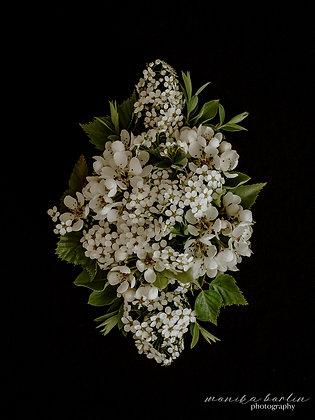 Kwiaty w bieli 01