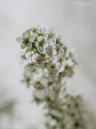 Biała mgiełka
