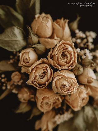 Herbaciane róże 02