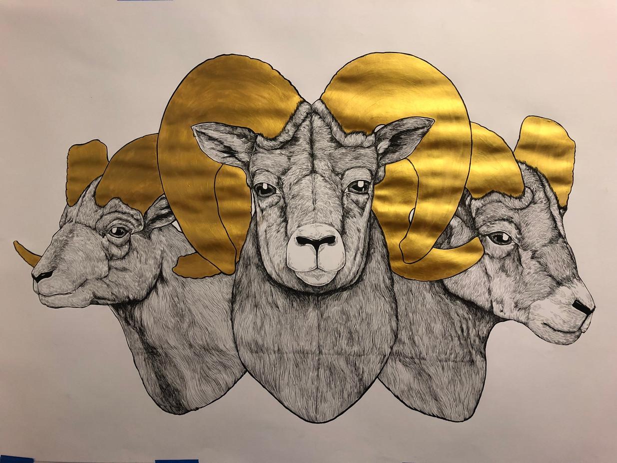 Rams Illustration