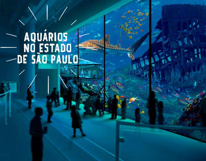 4 passeios incríveis por aquários no estado de São Paulo!