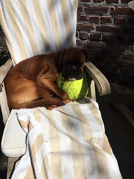 abel tennis.JPG