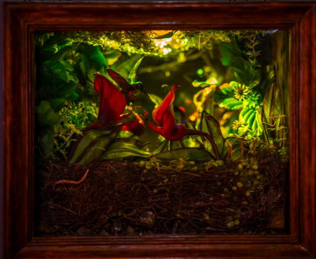 The Hummingbird Diorama.JPG
