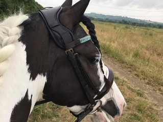 Happy horse and Dental nurse!
