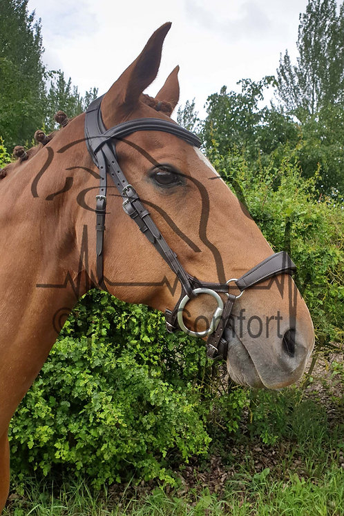 Bigg Comfort Jointed Drop Standard Headpiece Bridle