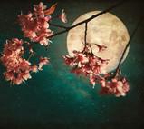 Full Flower Moon Of May Last Full Super -Moon of 2020