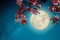 Super Moon Full Moon of March 2020. A Full Moon Welcoming Spring and all the New Growth 🌱