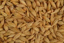 κριθάρι,δημητριακά,μπούλιας,ζωοτροφές,ζωοτροφή,χονδρική,εμπορία,εμπόριο