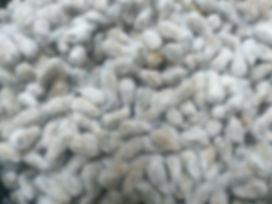 Μπούλιας, Ζωοτροφές, βαβμακόσπορος, βαμβακι, χονδρική, εμπορία, σπόροι