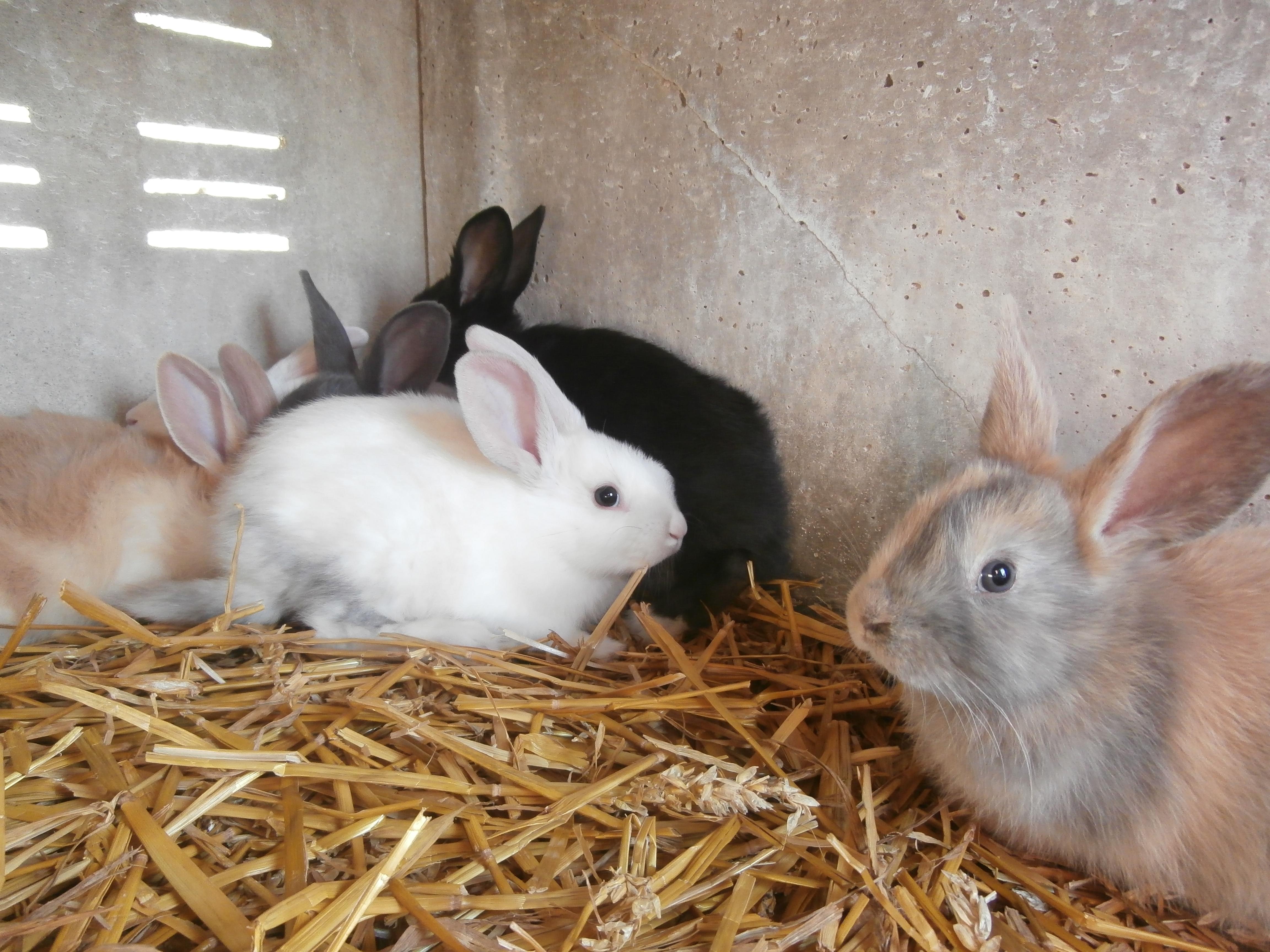 Les jeunes lapins