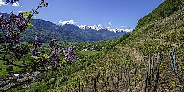 bianzone-vigneti-valtellina-wine-trail.j