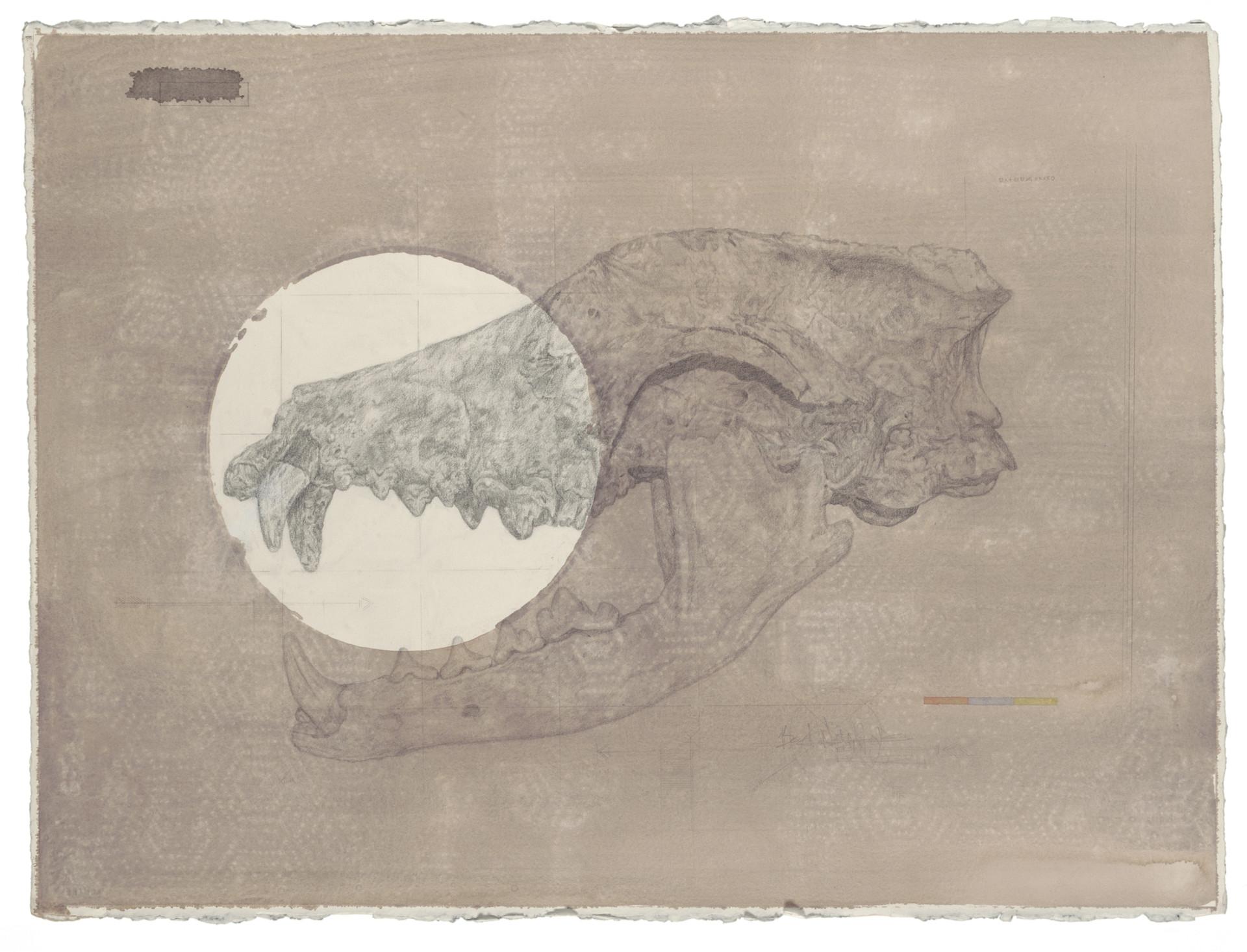 Coyote-skull-full_edit.jpg
