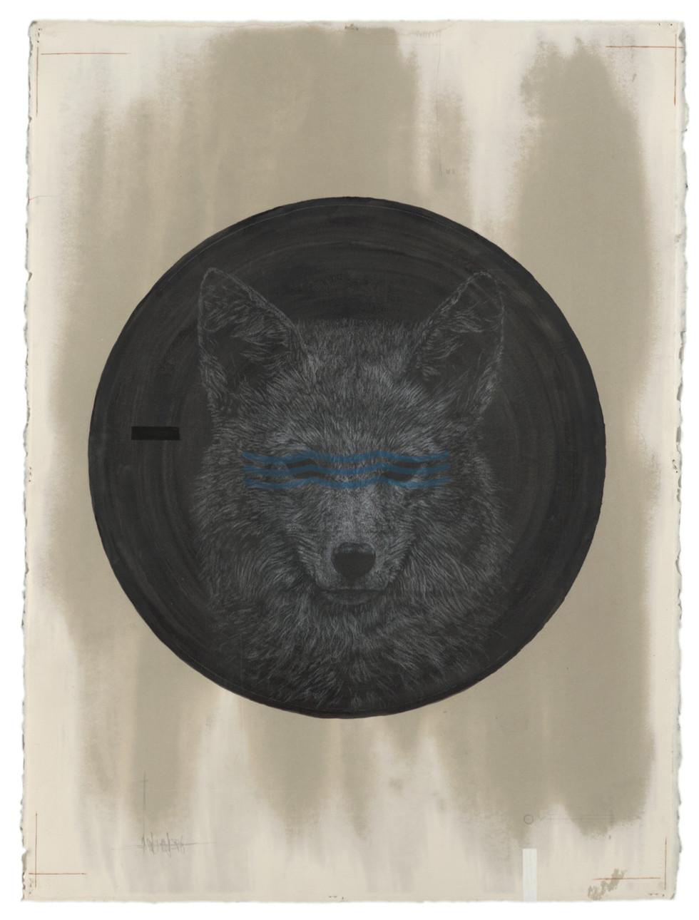 Cody-Comrie-Coyote-full.jpg