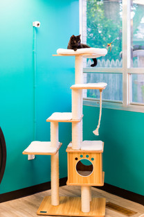 Cat trees are everywhere!