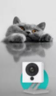 Cat with Wyze Cam
