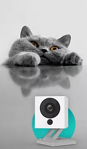 Cat with Wyze Cam