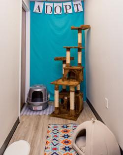 Foster Cat Adopt Room