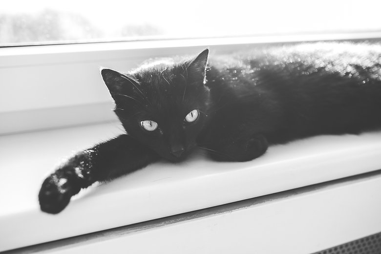 Canva - Black cat.jpg
