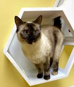 Cat-Guest Nyanee