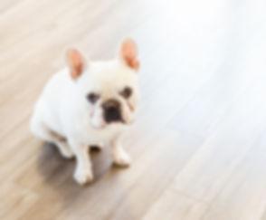 Dog%20pic_edited.jpg