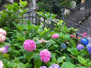 Im Garten der Romantik