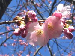 Aquila Camenzind_blossom