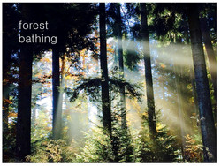 Yoga im Wald - Aquila Camenzind