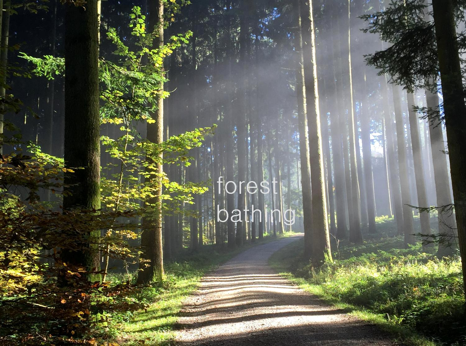 forest bathing Aquila Camenzind