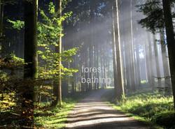 forest bathing Aquila Camenzind