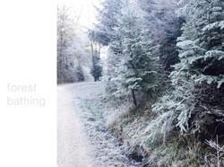 forest bathing - Aquila Camenzind