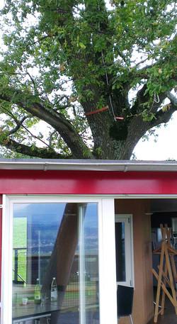 workshop treehouse