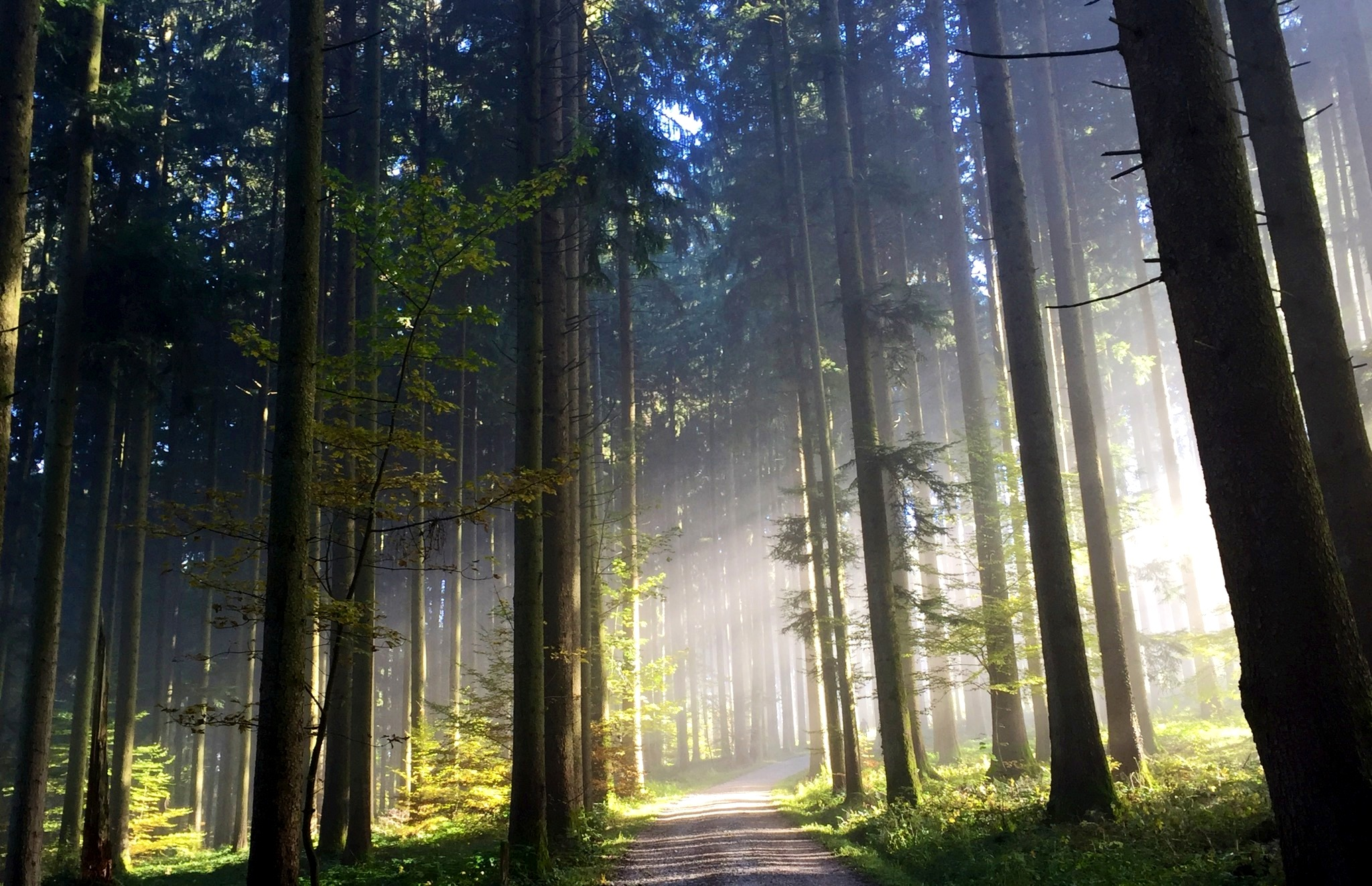 Waldbaden_Aquila Camenzind